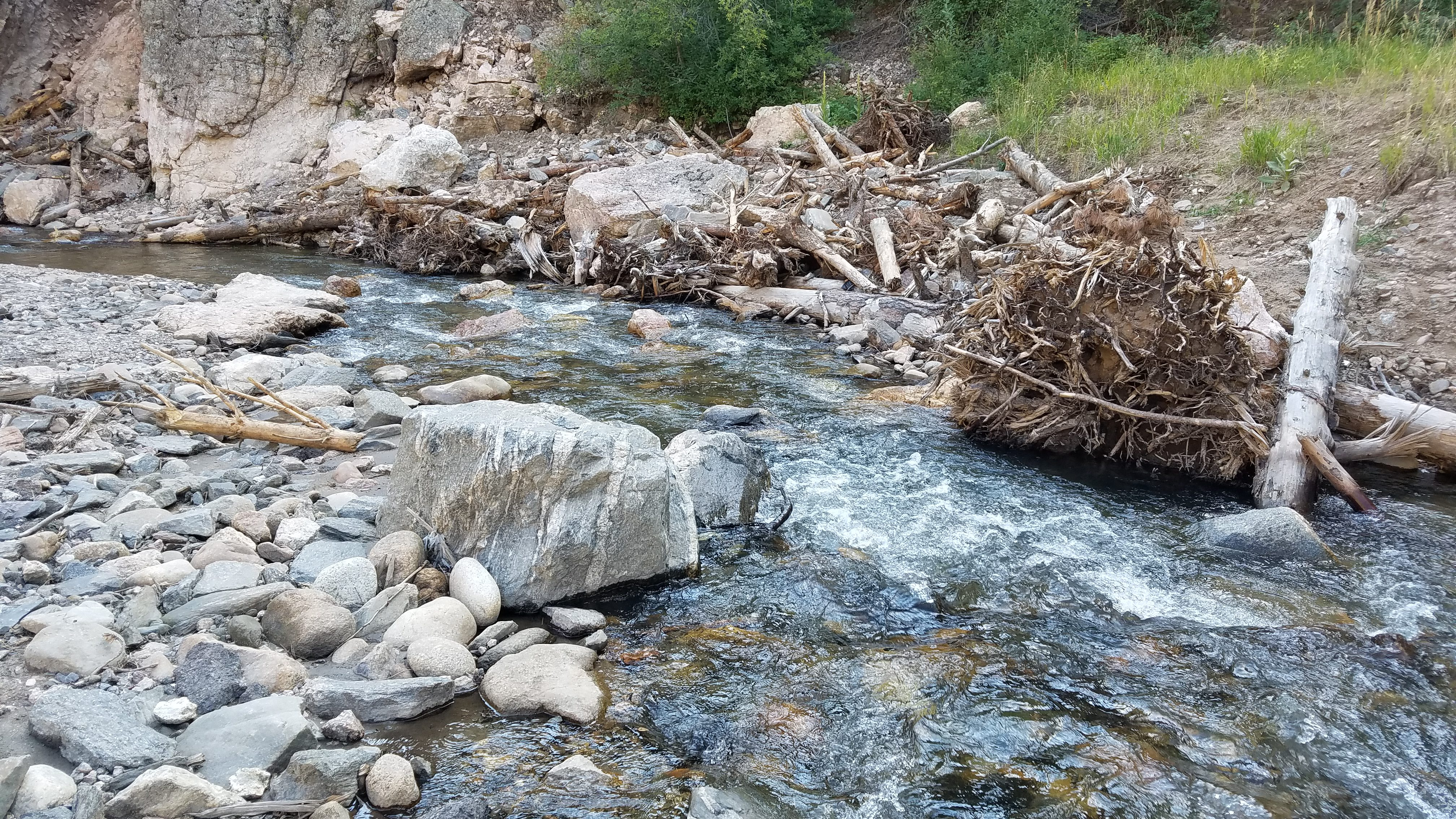 Large woody debris helps stabilize banks and creates habitat